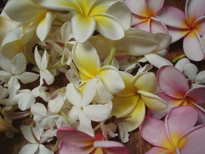 Fragrant Harvest, Frangipani, Jasmine, Noem Noem