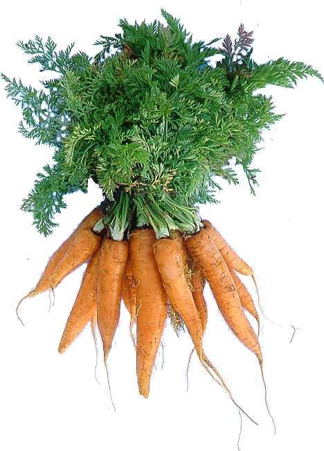 enb07436x_carrots