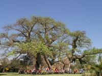 baobabclimb