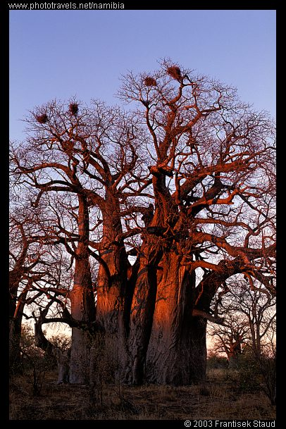 namibia-bushmanland-v-82.3