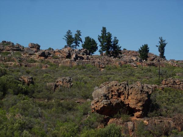 Cedarberg Landscape