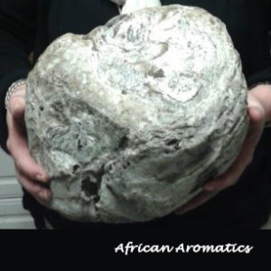 Ambergris - South Africa